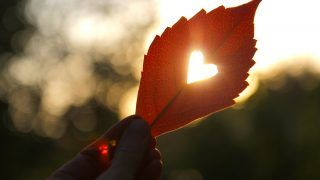 Autumn red leaf with cut heart in a hand.