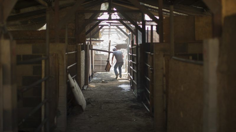 SYLMAR, CA - DECEMBER 06: Ranch hand Anthony Martin search through stables where some of the 29 horses were killed by the Creek Fire at Rancho Padilla on December 6, 2017 near Sylmar, California. Strong Santa Ana winds are pushing multiple wildfires across the region, expanding across tens of thousands of acres and destroying hundreds of homes and structures.   David McNew/Getty Images/AFP