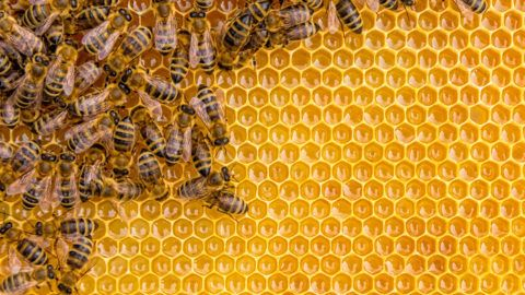 Close up view of the working bees on honey cells, copyspace for text