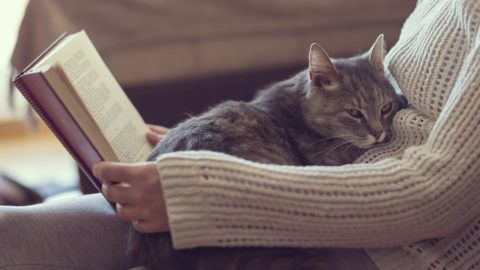 Soft cuddly tabby cat lying in its owner's lap enjoying and purring while the owner is reading a book. Focus on the cat; warm, cozy, domestic atmosphere