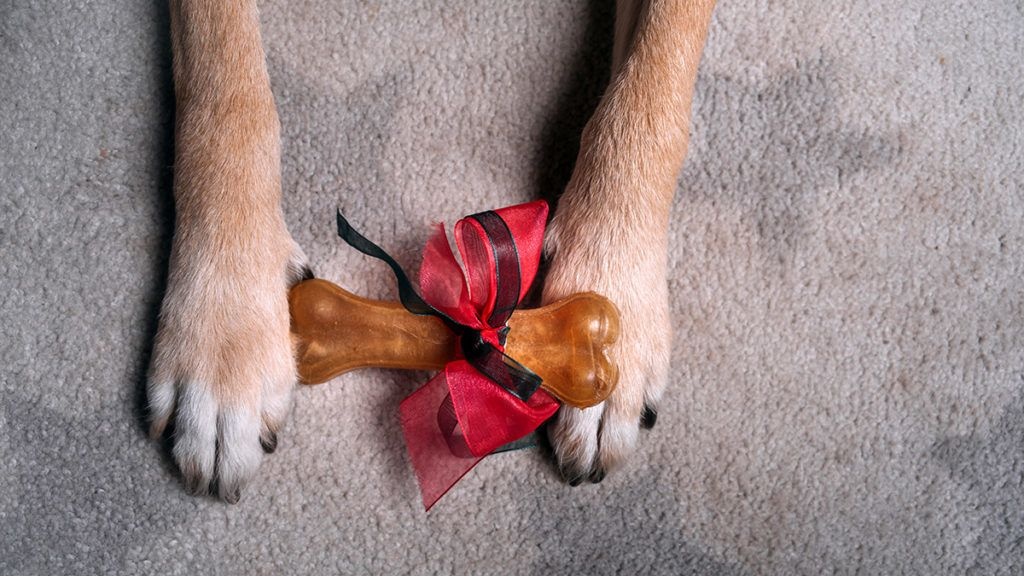 Gift bone with red ribbon between dog paws on gray carpet