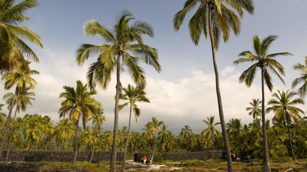 """Royal Gardens. Pu'uhonua o Honaunau National Historic Park. Big Island. Hawaii. Up until the early 19th century on Big Island, Hawaiians who broke the law could avoid a punishment of death by fleeing to a region of the west coast known as pu'uhonua, or """"place of refuge,"""" where they would be forgiven by an area priest. In present day, this place of refuge is a historical landmark preserved by the park service. It's also an extremely popular outing for Big Island vacationers, and the pictures make it easy to see why. Not only will you enjoy Pu'uhonua o Honaunau if you have a penchant for history and trivia, but it's also exploding with eye-catching temples, intricate ki'i (wood carvings) and plenty of the Honu, (or Hawaiian Green Sea Turtles) that live on the premises. And the breathtaking scenery, of course — the Pu'uhonua o Honaunau National Historical Park is located near some of the best snorkeling beaches of Big Island."""