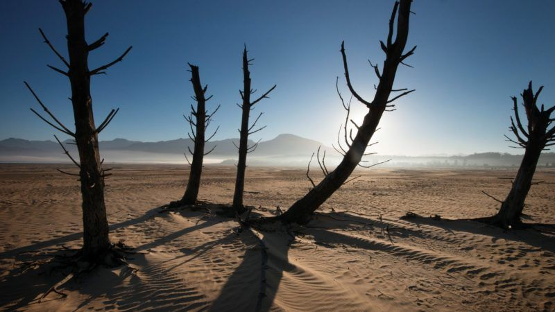 A picture taken on May 10, 2017 shows bare sand and dried tree trunks standing out at Theewaterskloof Dam, which has less than 20% of it's water capacity, near Villiersdorp, about 108km from Cape Town. South Africa's Western Cape region which includes Cape Town declared a drought disaster on May 22 as the province battled its worst water shortages for 113 years. This dam is the main water source for the city of Cape Town, and there is only 10% of it's usual capacity left for human consumption, at the last 10% is not useable, due to the silt content.  / AFP PHOTO / Rodger BOSCH