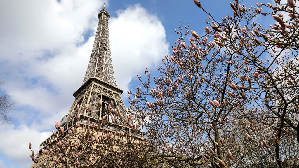 A picture taken on March 21, 2018 shows flowering trees near the Eiffel tower, on the second day of spring. / AFP PHOTO / LUDOVIC MARIN