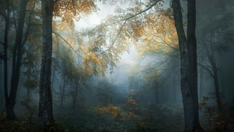 The autumn has begun to decorate with its colors the woods of the Balkans. National Park - Central Balkan, Bulgaria.