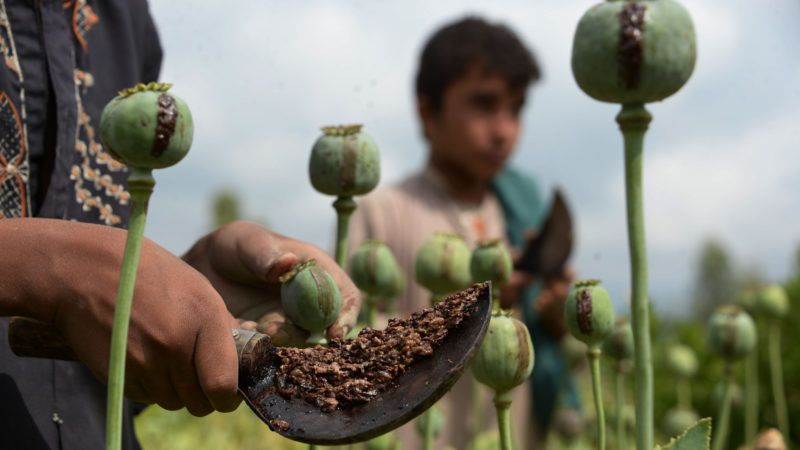In this photograph taken on April 17, 2018, an Afghan farmer harvests opium sap from a poppy field in the Surkh Rod district of Nangarhar province. The US government has spent billions of dollars on a war to eliminate drugs from Afghanistan, but the country still remains the world's top opium producer. / AFP PHOTO / NOORULLAH SHIRZADA