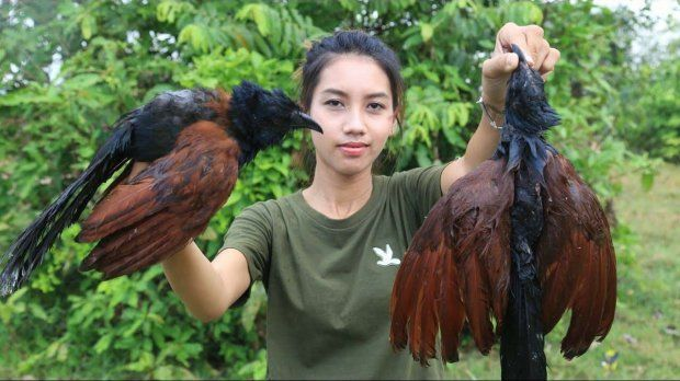 Ah Lin Tuch cooking and eating the protected birds.NEWS COPY - WITH VIDEO AND PICTURESA woman was arrested after she filmed herself cooking and EATING endangered animals - to earn money on YOUTUBE.Mother-of-one Ah Lin Tuch and husband Phoun Raty made videos of her skinning an endangered fishing cat, a large lizard and protected species of birds.Wearing hot pants and crop tops, she grilled them on a camp fire fire and ate them in the jungle near the home in Phnom Penh, Cambodia. Other clips show her eating a king cobra, shark, sting ray and frogs.But the footage sparked fury from viewers who slammed the would-be survivalist when it emerged that the many of the creatures were protected species. The country's Ministry of Environment launched a man hunt for the couple last Wednesday (09/05) and the next day they appeared before the public admitting they cooked the animals and apologising for ''destroying our wild life''.Chea Sam Arng, head of the Environment Ministry's General Directorate for Administration of Nature Conservation and Protection, said: ''We are now in the process of taking legal action against them while the working group is preparing a report on the matter.