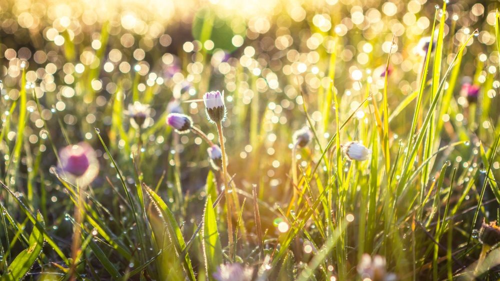Summer grass field with flowers, abstract background concept, soft focus, bokeh, warm tones.