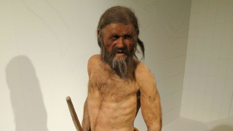 Ötzi the Similaun man displayed in the South Tyrol Museum of Archaeology in Bolzano, South Tyrol, Italy. The natural mummy Ötzi was found in September 1991 in the Ötztal Alps. He lived around 3359 and 3105 BCE. Pictured in February 2015.