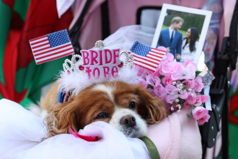 WINDSOR, ENGLAND - MAY 17: A dog sits on her owner's lap as they wait outside Windsor Castle ahead of the dress rehearsal for the wedding of Prince Harry and Meghan Markle on May 17, 2018 in Windsor, England.  (Photo by Chris Jackson/Getty Images)