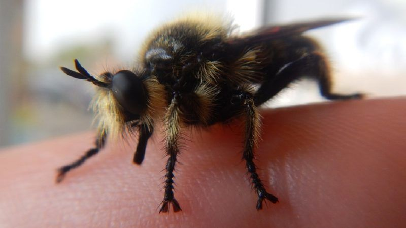 Bug Insect Finger Animal Bee Nature Bumblebee