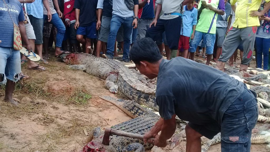 EDITORS NOTE: Graphic content / This photo on July 14, 2018 shows a man killing a crocodile among other dead crocodiles slaughtered by a mob in Sorong in Indonesia's Papua province. An angry mob has slaughtered nearly 300 crocodiles in Indonesia after a local man was killed by one of the reptiles, authorities said on July 16. / AFP PHOTO / SKYLA