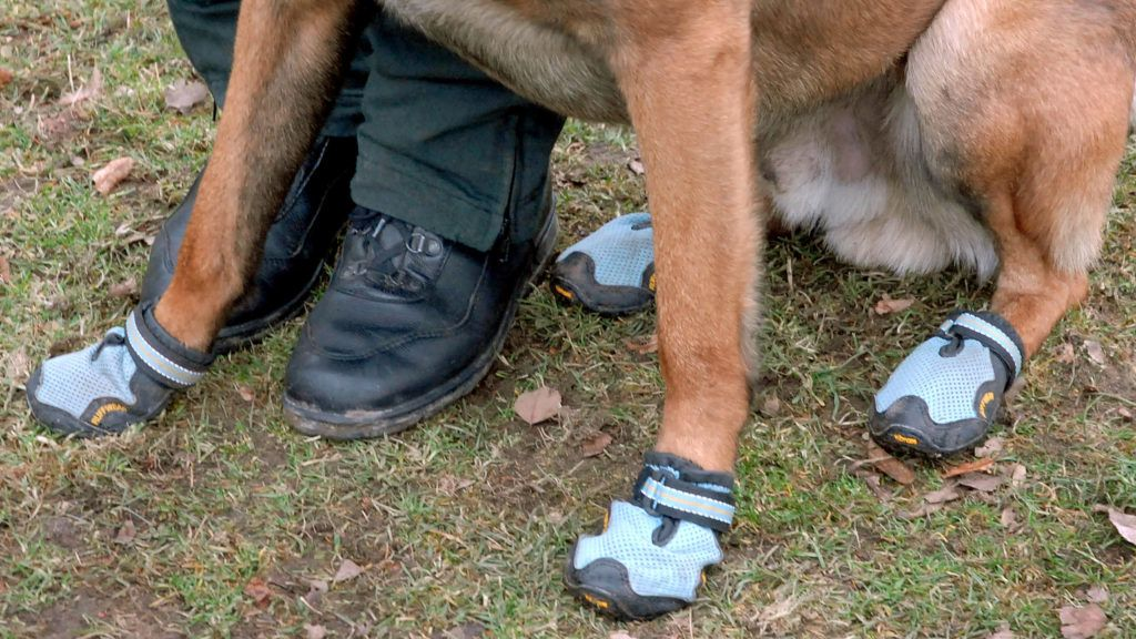 The undated handout released by the police of Duesseldorf, Germany, shows the shoes of a dog handler and his dog. Duesseldorf's police dogs will be on the beat in shoes which is a safety measure for the dogs. Since the can deposit was introduced, dogs face problems with pieces of broken glass. Photo: Police Duesseldorf