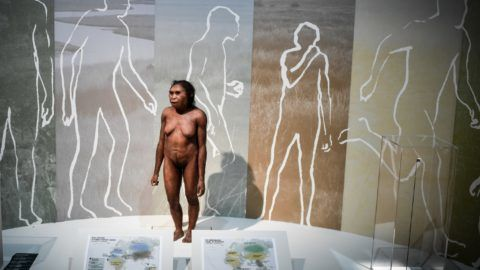 A picture taken on March 26, 2018 shows a thermoforming of a Flores woman displayed for the Neanderthal exhibition at the Musee de l'Homme in Paris.  / AFP PHOTO / STEPHANE DE SAKUTIN