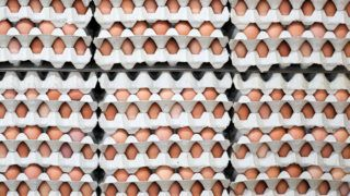 A picture taken on January 10, 2018 shows trays of eggs at a poultry farm in Schoenberg, eastern Germany. / AFP PHOTO / dpa / Jan Woitas / Germany OUT