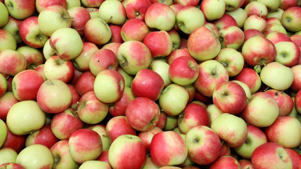 "28 August 2018, Germany, Boddin: At Boddinobst GmbH & Co. KG, apples of the variety Elstar are harvested. Harvest started a good two weeks earlier than usual. Fruit growers can expect a yield of around 37,000 tonnes, which is in line with the average over the past ten years. (on ""Early start of apple harvest - fruits are sweet and aromatic"" from 28.08.2018) Photo: Bernd Wüstneck/dpa"
