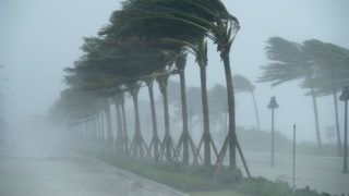 FORT LAUDERDALE, FL - SEPTEMBER 10: Trees bend in the tropical storm wind along North Fort Lauderdale Beach Boulevard as Hurricane Irma hits the southern part of the state September 10, 2017 in Fort Lauderdale, Florida. The powerful hurricane made landfall in the United States in the Florida Keys at 9:10 a.m. after raking across the north coast of Cuba.   Chip Somodevilla/Getty Images/AFP