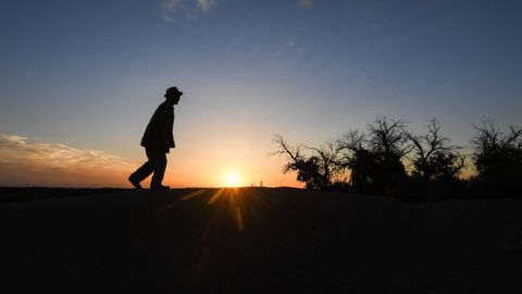 """(181012) -- EJINA BANNER, Oct. 12, 2018 (Xinhua) -- Ban Du, an 81-year-old herdsman of the Mongolian ethnic group, walks past trees of populus euphratica, commonly known as desert poplar, in Ceke Gacha of Ejina Banner, north China's Inner Mongolia Autonomous Region, Sept. 23, 2018. Ceke Gacha, a village in the Badain Jaran Desert, is known for its dry weather and tough environment. However, Ban Du, unlike other herdsmen, is unwilling to leave his hometown and be relocated to a city house offered by the local government. He has contracted a grassland in the desert and takes care of the century-old desert poplar trees covering over 2,000 hectares of land. To irrigate the trees, he dug a dozen wells in the past 30 years and used his own savings from selling cattle to clear the sand-blocked river channels. Ban Du's hard work won social support. In July 2018, the China Green Foundation raised over 100,000 yuan (14,486 U.S. dollars) to help Ban Du's irrigation efforts. Water finally flew into Ban Du's forest in October this year. """"With water, the trees will become green and the eco-system will recover,"""" Ban Du said, noting that he would stay in the desert to take care of the desert poplar trees. (Xinhua/Liu Lei) (ry) (zt)"""