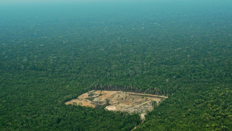 (FILES) A file photo taken on September 22, 2017 shows an aerial view of deforestation in the Western Amazon region of Brazil. - Unbridled consumption has decimated global wildlife, triggered a mass extinction and exhausted Earth's capacity to accommodate humanity's expanding appetites, the conservation group WWF warned on October 30, 2018. For freshwater fauna, the decline in population over the 44 years monitored was a staggering 80 percent. Regionally, Latin America was hit hardest, seeing a nearly 90 percent loss of wildlife over the same period. (Photo by CARL DE SOUZA / AFP)