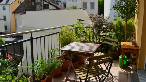 Plants, tables and chairs in a balcony in a spring /summer day with old architecture in the background.