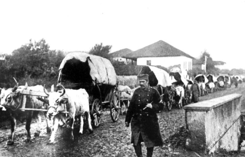 A Serbian supply train of bullock carts. Austro-Hungary invaded Serbia in July 1914.World History Archive