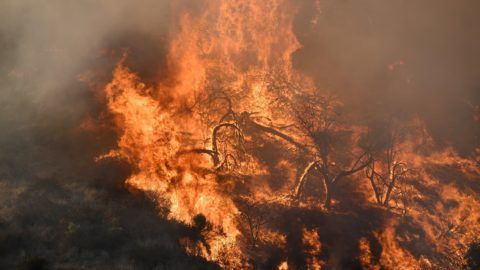 Flames from a wildfire burn a portion of Griffith Park in Los Angeles, California, November 9, 2018. - Staff at the Los Angeles Zoo, which is located in the park are preparing animals to be evacuated. (Photo by Robyn Beck / AFP)