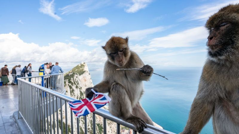 24 November 2018, Great Britain, Gibraltar: A Barbary monkey sits on the railing of a viewing platform on the rocks of Gibraltar with a Union Jack, which he has stolen from a tourist. Photo: Frank Rumpenhorst/dpa