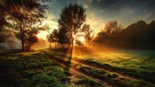 One September morning the edge of a forest in southern Hungary..    Biosphoto / Zoltan Ritzel
