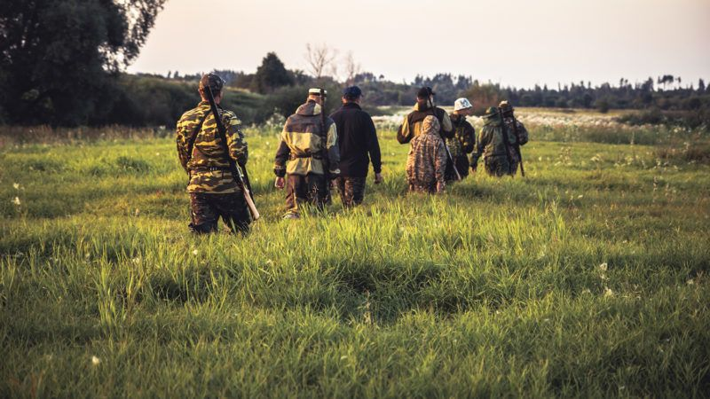 Hunting scene with group of males hunters going through tall grass on rural field at sunset during hunting season