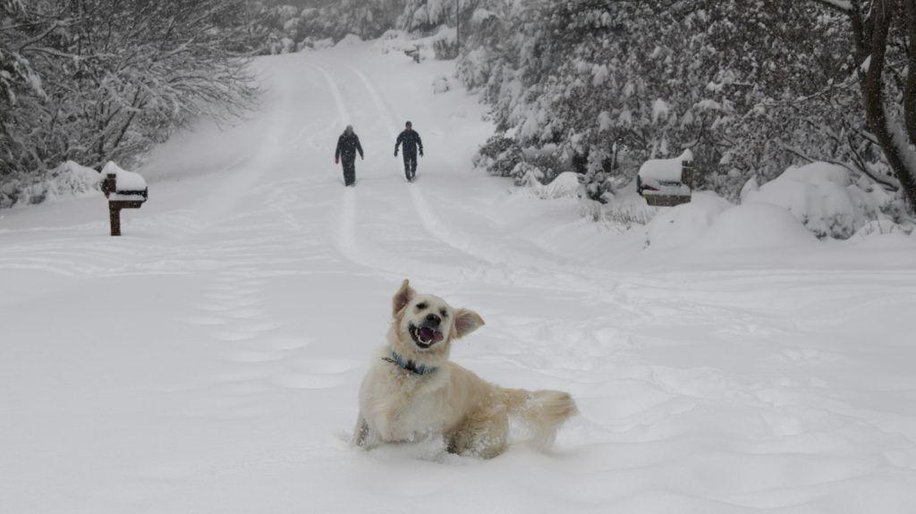 Morganton, 2018. december 10. A hólepte Morganton településen kutyával sétálnak Észak-Karolina szövetségi államban, ahol a havazás miatt rendkívüli állapotot hirdettek ki 2018. december 9-én. Az Egyesült Államok délkeleti vidékein dúló hóviharok következtében mintegy 380 ezren maradtak áramszolgáltatás nélkül. A hófúvások miatt több mint kétezer légi járatot töröltek. MTI/AP/Kathy Kmonicek