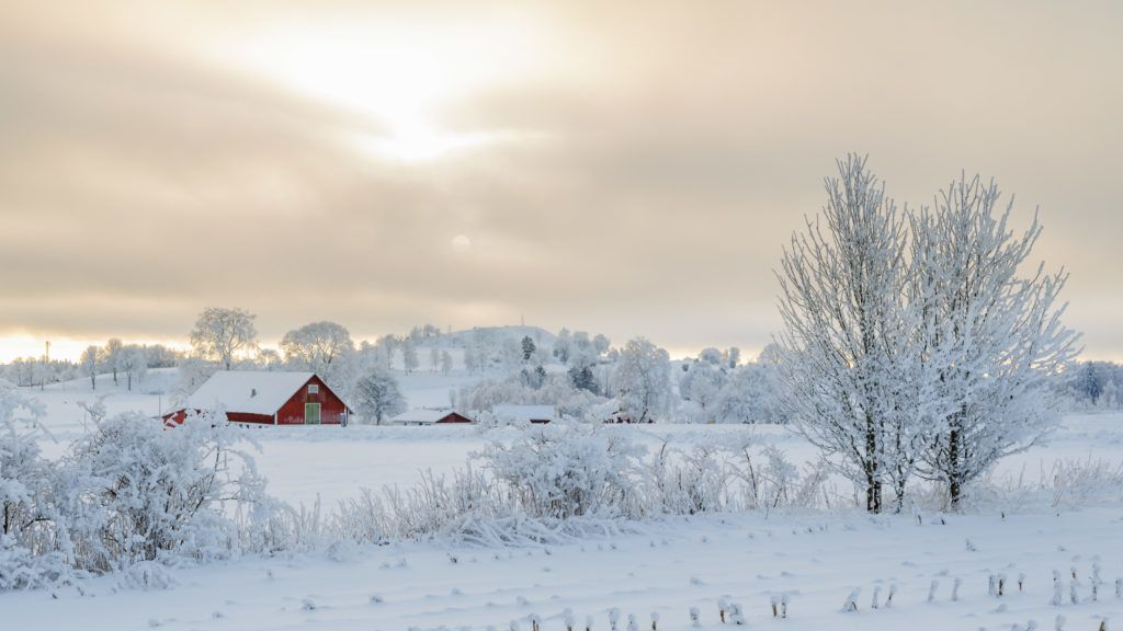 Farm in a rural winter landscape with snow and frost