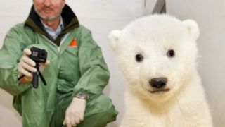 """This handout picture released by the Tierpark Berlin shows the still unnamed female 11-week-old polar bear cub during a first veterinary examination at the Tierpark zoo in Berlin, on February 14, 2019. (Photo by Steffen Freiling / TIERPARK BERLIN / AFP) / RESTRICTED TO EDITORIAL USE - MANDATORY CREDIT """"AFP PHOTO / TIERPARK BERLIN/ STEFFEN FREILING / HANDOUT"""" - NO MARKETING NO ADVERTISING CAMPAIGNS - DISTRIBUTED AS A SERVICE TO CLIENTS"""