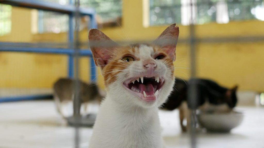 JAKARTA, INDONESIA - JANUARY 17: A stray cat is in quarantine before being adopted at the veterinary center (Puskewan) in Jakarta, Indonesia on January 17, 2019. Stray cats in the city are sterilized to control their population and the risk of rabies. Anton Raharjo / Anadolu Agency