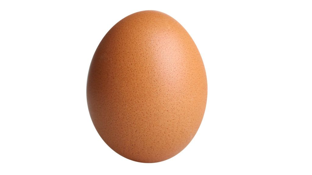 One brown egg isolated on white background.