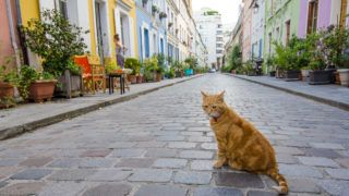 Paris, France - August 4, 2015: Resident tabby cat sits in the middle of Rue Cremieux, in the 12th Arrondissement, is one of the prettiest residential streets in the city.