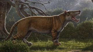 "This handout reconstruction image released on April 18, 2019 by Ohio university in Athens, Ohio, shows a Simbakubwa kutokaafrika, a gigantic mammalian carnivore that lived 22 million years ago in Africa and was larger than a polar bear. (Photo by Mauricio ANTON / ohio university / AFP) / RESTRICTED TO EDITORIAL USE - MANDATORY CREDIT ""AFP PHOTO / OHIO UNIVERSITY / MAURICIO ANTON"" - NO MARKETING - NO ADVERTISING CAMPAIGNS - DISTRIBUTED AS A SERVICE TO CLIENTS"