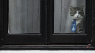 A cat named 'James' wearing a collar and tie looks out of the window of the Ecuadorian Embassy in London on January 26, 2018 where WikiLeaks founder Julian Assange has been hold up for over five years. - Lawyers for WikiLeaks founder Julian Assange, who has been sheltering at Ecuador's London embassy for five years, on January 26 asked a London court to remove the arrest warrant hanging over him. Assange moved into the embassy in 2012 to dodge a European Arrest Warrant issued over a Swedish probe into rape allegations, but Sweden dropped their investigation last year. However, British police say they will still arrest Assange if he steps foot outside the embassy for failing to surrender to a court after violating bail terms. (Photo by Adrian DENNIS / AFP)