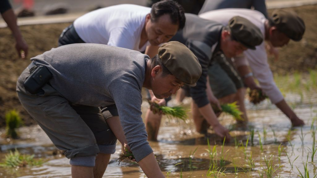 People take part in an annual rice planting event in Nampho City in Chongsan-ri, near Nampho on May 12, 2019. - The event takes place every May 12 to mark the occasion in 1971 when late North Korean leader Kim Jong Il planted rice in the area. (Photo by KIM Won Jin / AFP)