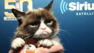 SAN FRANCISCO, CA - FEBRUARY 04: Grumpy Cat attends SiriusXM at Super Bowl 50 Radio Row at the Moscone Center on February 4, 2016 in San Francisco, California.   Cindy Ord/Getty Images for SiriusXM/AFP