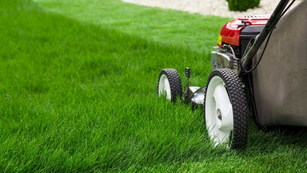 Photograph of lawn mower on the green grass. Mower is located on the right side of the photograph with view on grass field.