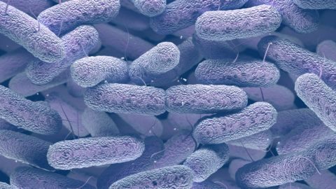 Enterobacteriaceae: large family of Gram-negative bacteria that includes many of the more familiar pathogens, such as Salmonella and Escherichia coli.