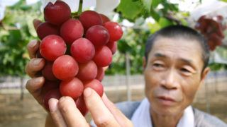 """Japanese farmer Tsutomu Takemori displays a cluster of recently-developed """"Ruby Roman"""" grapes at his vineyard in Kahoku city in Ishikawa prefecture, northern Japan on August 11, 2008. A Japanese hotel has auctioned a first bunch of """"dream grapes"""" developed over 14 years at 910 dollars, 30 dollars for a grape, to delight customers. The bunch weighed some 700 grammes. As the reddish-skin variety boasts the size of each grape, which can be as big as three centimetres in diametre, the bunch had about 30 grapes.    AFP PHOTO / JIJI PRESS (Photo by STR / JIJI PRESS / AFP)"""