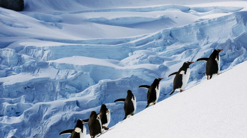 a group of penguins on a mission in antarctica