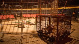 This photo taken on June 1, 2018 shows a Siberian tiger (centre R) and an African lioness (centre L) sitting in a small cage as a circus member (R) showers at the camp of the Chinese Prosperous Nation Circus Troupe in the National Forest Park of Guanyin Mountain in Dongguan. - The use of wild animals in circus shows has come under growing criticism around the world, with some countries banning the practice, but for the Chinese troupe, the beasts are considered a major attraction. (Photo by NICOLAS ASFOURI / AFP) / TO GO WITH AFP STORY China-animal-circus by Joanna Chiu and Xin Liu