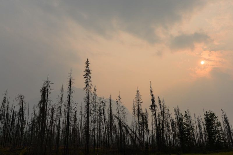 A view of charred lodgepole pines burned by forest fire in July 2018 in Kootenay Plains Ecological Reserve, seen from Highway 11 (David Thompson Hwy), during smoky and hazy weather conditions that blanketed the province of Alberta, impacted by B.C. wildfire smoke. On Sunday, August 19, 2018, in Alberta, Canada. (Photo by Artur Widak/NurPhoto)