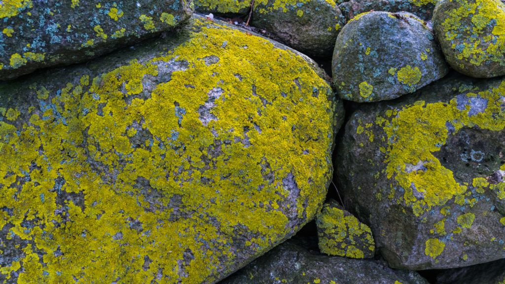 rocks covered with lichen