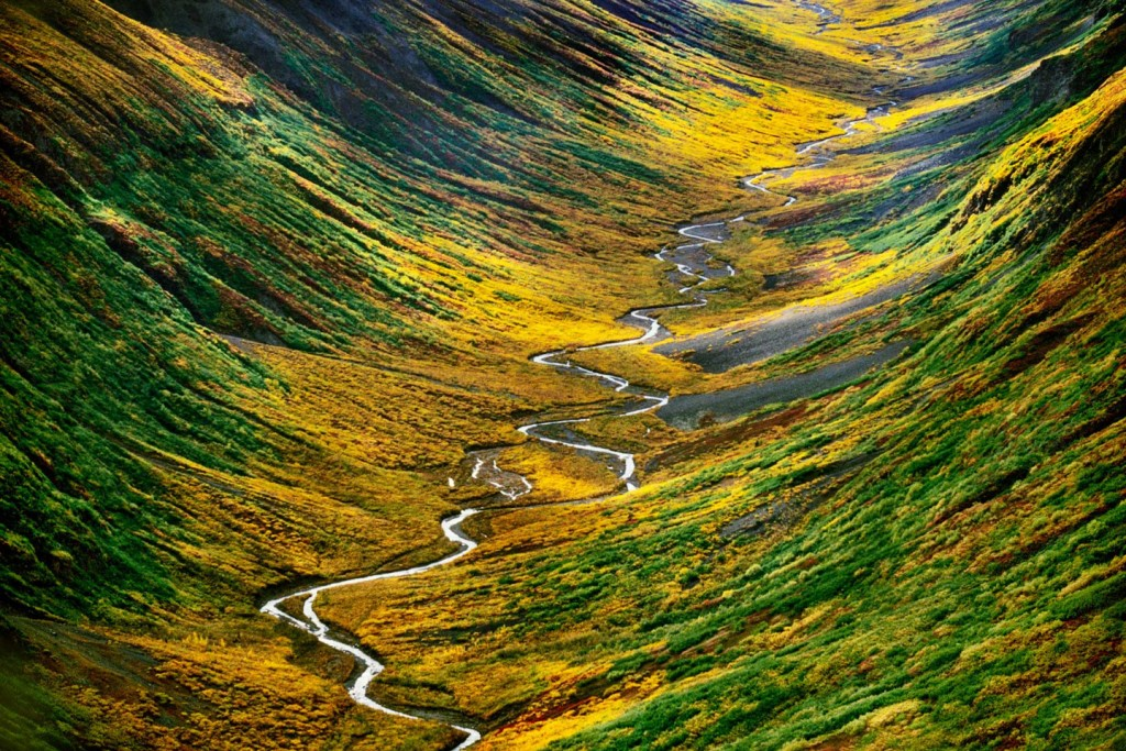Wrangell-St. Elias National Park, Alaska, USA --- Autumn colors in the Bremmer Valley located in Wrangell St. Elias National Park, Alaska. --- Image by © Frans Lanting/Corbis