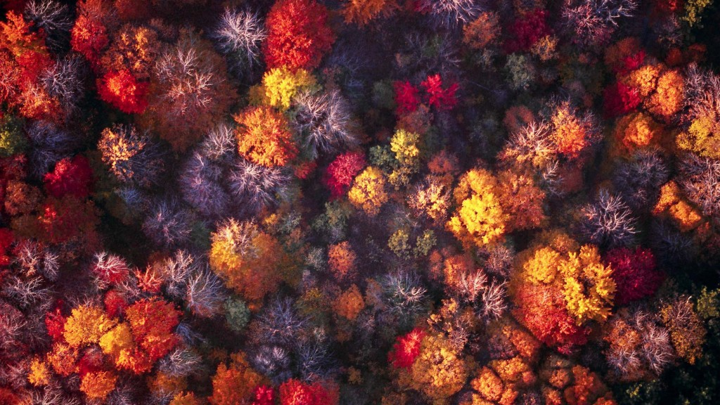 Aerial of the forest --- Image by © Rob Lettieri/Corbis