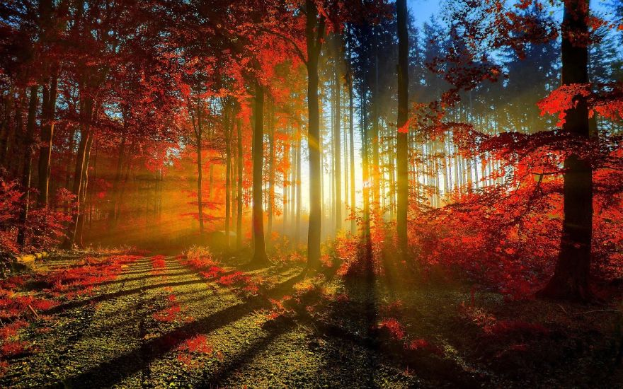forest-photography-3__880