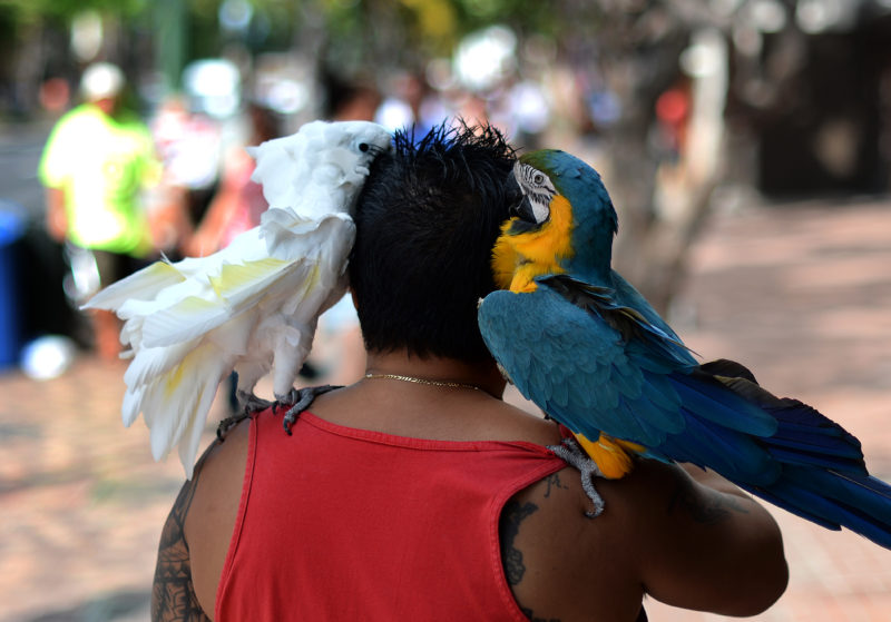 "A man waits for tourists to have their pictures taken with his parrots in exchange for small donations in Honolulu, Hawaii, on January 2, 2014. Tourism has contributed 1.4 billion US dollars in tax revenue for the state through November 2013, 40 million dollars more than the same period last year. However, while year-to-date visitor arrivals and expenditures continue to exceed last year, growth continues to slow during the second half of the year with monthly decreases in arrivals and expenditures in November 2013,"" according to Hawaii Tourism Authority (HTA).  AFP PHOTO/Jewel SAMAD / AFP PHOTO / JEWEL SAMAD"